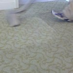 Professional Residential and Commercial Carpet Cleaning