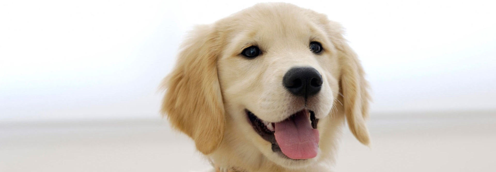 We remove pets stain & odors from your carpets   Jersey Steamer ...